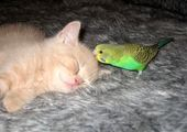 خانه های لاکچری برای گربه های خانگی+عکس