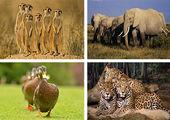 تصاویر حیوانات روی سنگ+تصاویر
