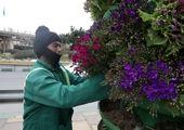۳۰ فرش گل در بزرگراه های منطقه ۲ پایتخت گسترده شد