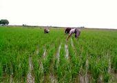 بازرسی دوره ای از فروشگاههای سم و کود محصولات کشاورزی و گیاهی در شهرستان ساوه