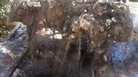 انسداد 7 حلقه چاه غیر مجاز در اسلامشهر