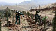 آغاز کاشت ۱۵ هزار نهال در بوستان جنگلی سرخه حصار