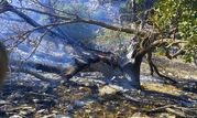 آتش سوزی در جنگل ها و مراتع گچساران ادامه دارد