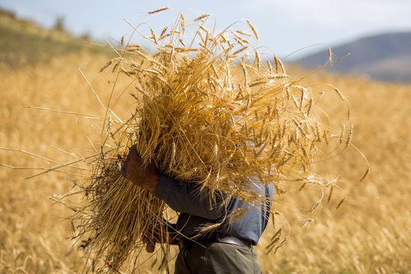 از قیمت گذاری نامناسب تا ریختن یارانه در جیب کشاورز خارجی