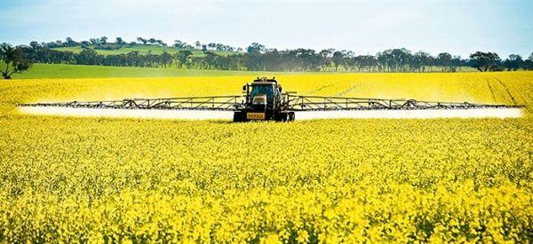 واریز 100 درصدی وجوه خرید تضمینی کلزا توسط بانک کشاورزی