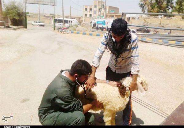 راهکار نوین برای درمان حیوانات در سراسر کشور معرفی شد