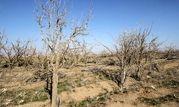 90 درصد مساحت چهارمحال و بختیاری درگیر خشکسالی است