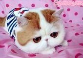 گربه نگین صدق گویا + عکس