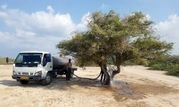 آبیاری درختان قدیمی و گونه های ارزشمند گیاهی در کیش
