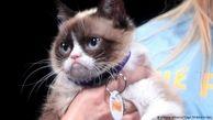 گربه مولتی میلیونر اینستاگرامی مرد+ عکس