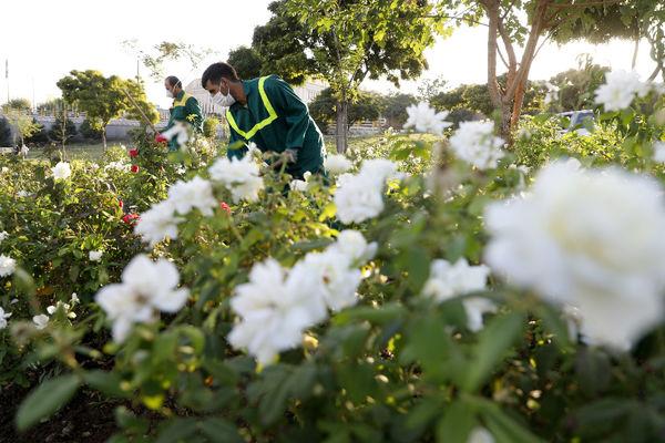 آغازکاشت گلهای پاییزه در شرق تهران