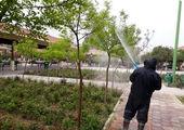 اکیپ ویژه پایش سلامت درختان در مرکز شهر تهران فعال شد