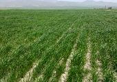 سیستمهای آبیاری نوین در سطح ۳ هزار و ۵۰۰ هکتار اراضی استان مرکزی در دست اجراست