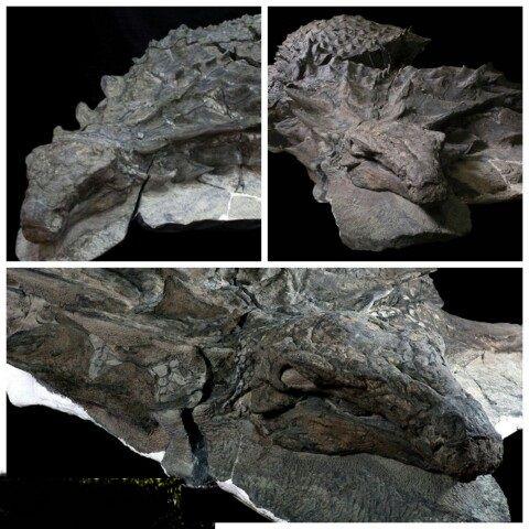 سالم ترین فسیل دایناسور  که ۱۱۰ میلیون سال عمر دارد+عکس