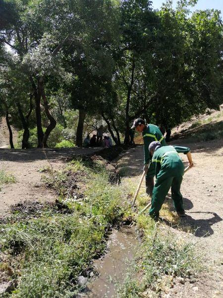 اجرای طرح پاکسازی جنگل کارا  درمنطقه2