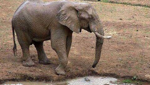 عزاداری در باغ وحش به خاطر مرگ بچه فیل محبوب +عکس