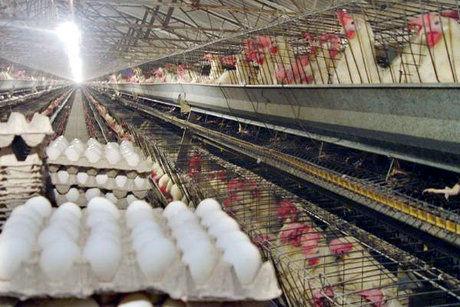 احتکار ۵ هزار تخم پرنده ای نایاب+عکس