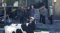توضیح بانک ملی ایران درباره تقاضای تسویه بدهی یک فرد با گاو