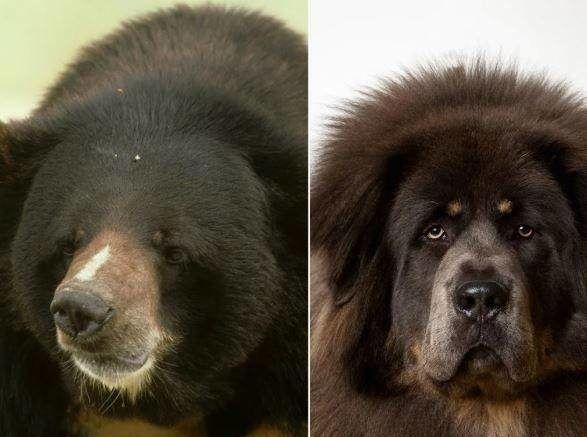 کبابِ خرس، کار دست شکارچیها داد+عکس