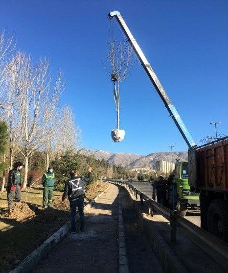 انتقال درختان پروژه پل غیر همسطح بزرگراه باقری - فرجام با رای کمیسیون ماده 7