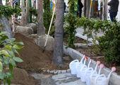 بیش از  1500 اصله درخت در منطقه 4 در مقابل آفات و بیماریها محافظت شدند