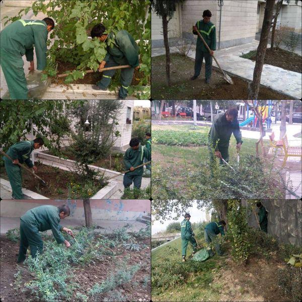 بهسازی و پاکسازی فضای سبز معابر ناحیه۶