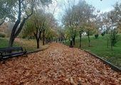 تیمار بیش از سه هزار اصله درخت در  منطقه 4 تهران