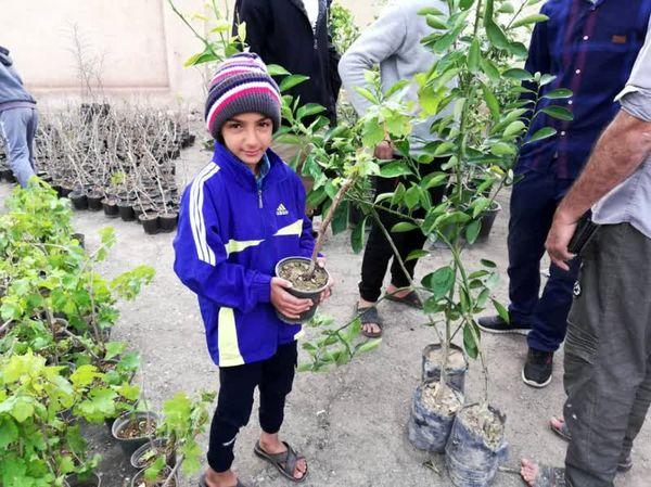 توزیع 7 هزار اصله درخت مثمر در روستاهای دهستان قمرود و قنوات