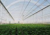 ارزش طرحهای کشاورزی استان مرکزی در هفته دولت ۸۲۸ میلیارد ریال است