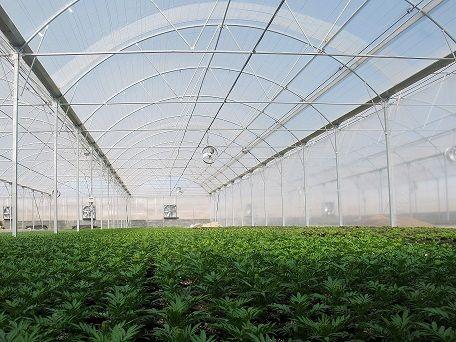 افزایش سه برابری گلخانههای استان مرکزی برای گذر از کم آبی